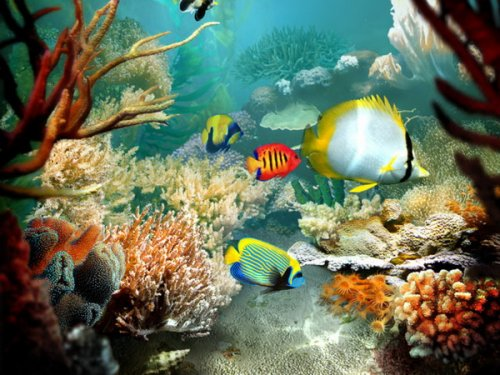 Tropical Fish 3D Screensaver 1.1 Build 6